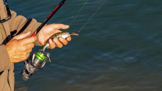 Жителей Воронежской области предупредили о смертельной опасности рыбалки у ЛЭП
