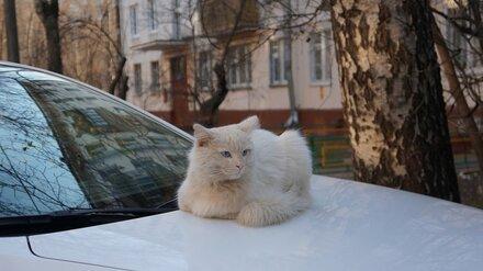 В центре Воронежа люди отбили у кошки летевшего на юг коростеля