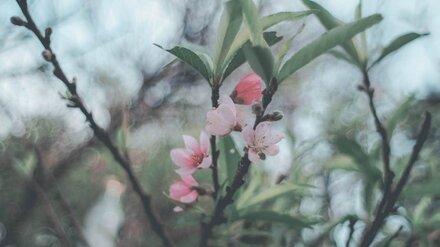 Концепцию застройки яблоневых садов впервые покажут воронежцам на форуме «Зодчество»