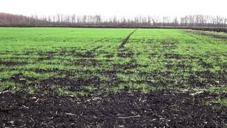 Более половины озимых в Воронежской области находятся в плохом состоянии
