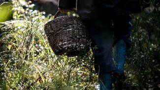 В Воронежской области 78-летняя пенсионерка выжила после двух ночей в лесу