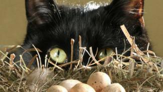Куриные яйца,  сметана и компот: в Воронежской области «вор-гурман» предстанет перед судом