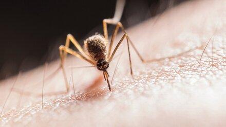После укусов комаров 4 воронежца заразились экзотической лихорадкой Западного Нила