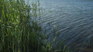 В Воронежской области в пруду нашли тело 40-летнего охранника