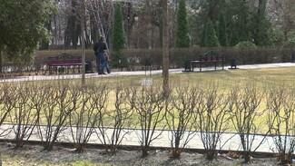Ринит – у каждого четвёртого. Как аллергикам выжить в сезон цветения в Воронежской области