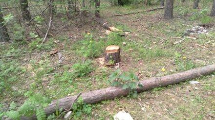 Вырубка деревьев в воронежском парке «Оптимист» оказалась законной