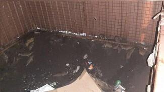 Воронежцы сообщили о нашествии крыс в новом ЖК в центре города