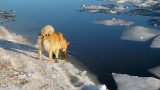 Спасатели предупредили воронежцев о промоинах во льду водохранилища