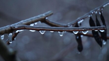 Аномально тёплая погода установила в Воронеже температурный рекорд