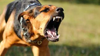 «Нет опасных пород!» Воронежский инструктор выступил за обязательное обучение владельцев собак