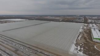 В Воронежской области летом запустят новый тепличный комплекс