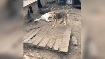 В воронежском скандальном приюте «Дора» зверски убили десятки собак