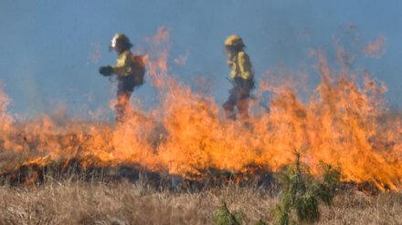 Воронежские спасатели третьи сутки тушат ландшафтный пожар в пойме реки