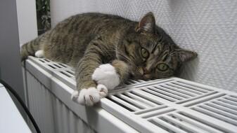 В жилые многоэтажки Воронежа начали подавать тепло