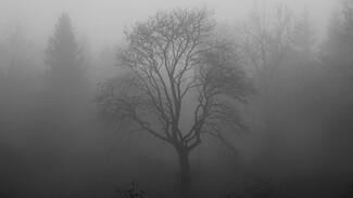 Воронежскую область окутает опасный туман