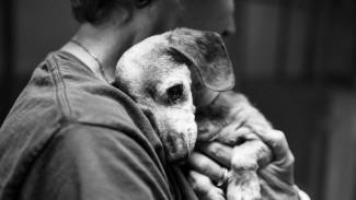 Дорого и больно. Как в Воронеже найти хозяинадля бездомной собаки