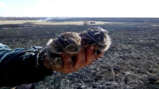 Крошечных зайчат спасли при тушении пожара в Воронежской области