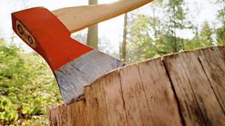 Следователи проверят законность вырубки деревьев в аннинском парке
