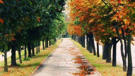 В Воронежской области на первой рабочей неделе осени сохранится летняя погода