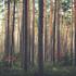 Эксперты посчитали погибшие деревья в Воронежской области