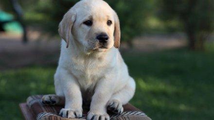 Любовь к чужому щенку довела воронежского сельчанина до уголовного дела
