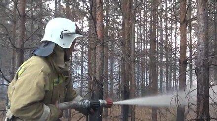 Площадь ландшафтного пожара в Воронежской области выросла до 23 га