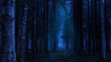 В лесу под Воронежем заблудились два человека