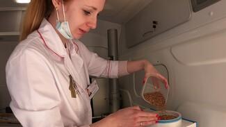Специальные машины оценят качество зерна в Воронежской области