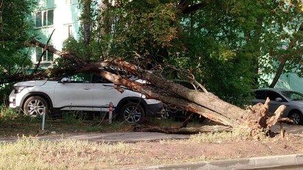 В Воронеже поваленное непогодой дерево упало на иномарку