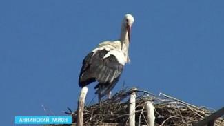 Жители Старого Курлака просят приютить аиста в зоопарке или у волонтёров
