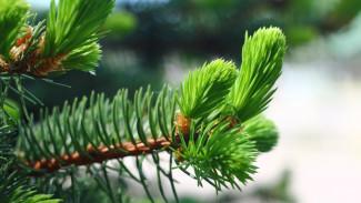 В Воронежской области до конца года появится 1,7 тыс гектаров леса