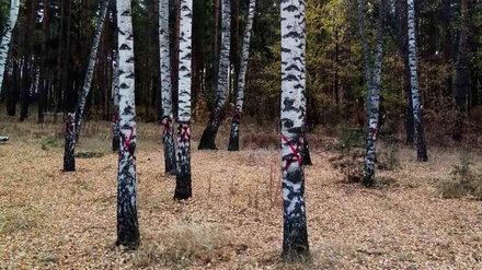 Красные кресты на деревьях в Северном лесу перепугали воронежцев