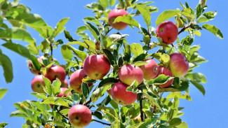 На землях яблоневых садов в Воронеже реализуют мегапроект