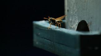В Воронеже ещё один человек умер после укуса осы