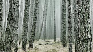 Пропавшего под Воронежем мужчину нашли мёртвым в лесопосадке