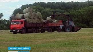 В хозяйствах Воронежской области начали заготавливать сено