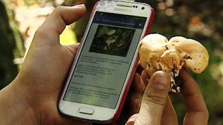 Грибной сезон: Высокие технологии на тихой охоте