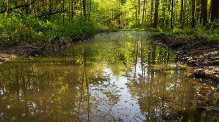 В воронежском селе нашли загрязняющую Хопёр подозрительную трубу