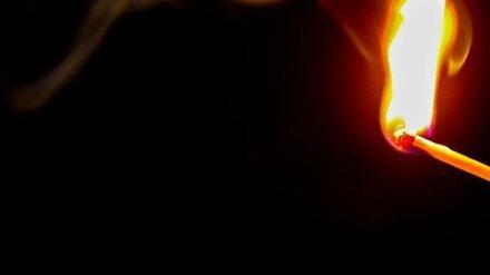В Воронежской области неизвестные спалили 20 га хвойного леса
