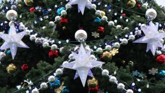 Цена вопроса – 22 тыс. рублей. Почему Воронеж рискует остаться без главной новогодней ёлки