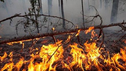 В 18 районах Воронежской области установилась высокая степень пожарной опасности