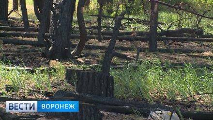 В Воронежской области объявлен четвёртый класс пожарной опасности