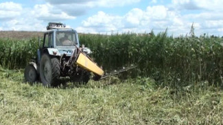 90 гектаров конопли выкосили за лето под контролем наркополицейских