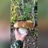 Воронежцы похвастались собранными после затяжных дождей килограммовыми грибами