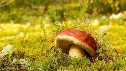 В Воронежской области число отравившихся грибами выросло до 11 человек