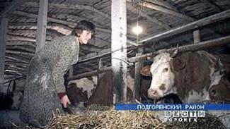 В Подгоренском районе возрождают животноводство