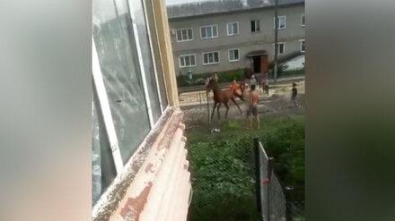 Полиция займётся историей об избиении воронежцем лошади на глазах у детей