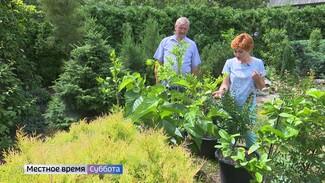 Воронежцам рассказали, как вырастить финики и инжир на своём огороде