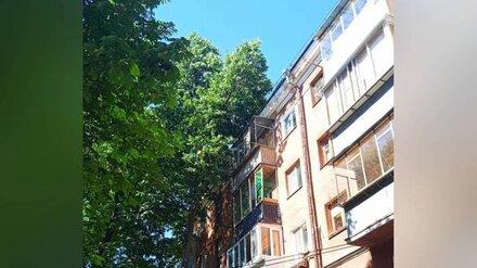 Разросшиеся деревья проникли на балконы пятиэтажки в центре Воронеже