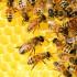 Воронежский пчеловод отсудил у соседа компенсацию за отравленный мёд